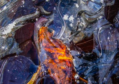 Colored Ice